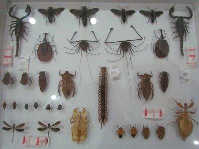 Arthopods