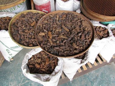 Luwak coffee seeds