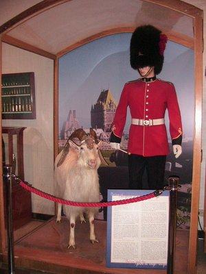 Canadian_g..nt_goat.jpg