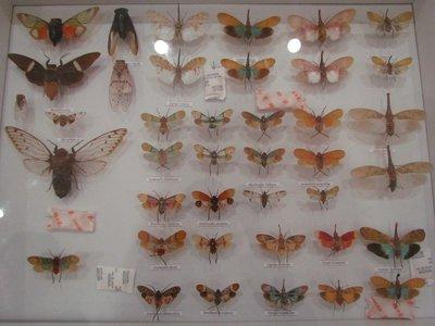 Cicadas & Lanternfly