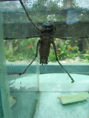 Weird insect