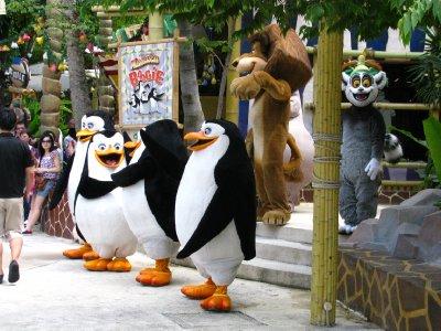 Madagascar_Boogie.jpg