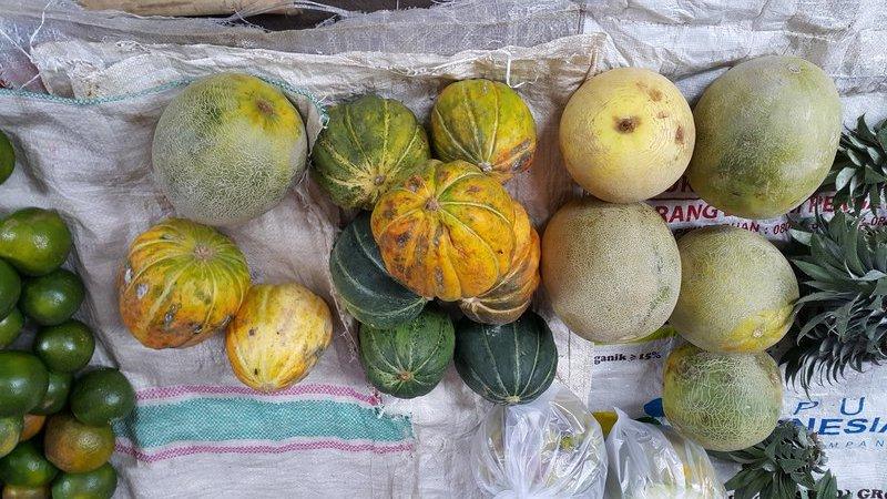 Melons and pumpkins
