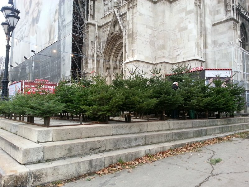 Christmas trees outside Votivkirche