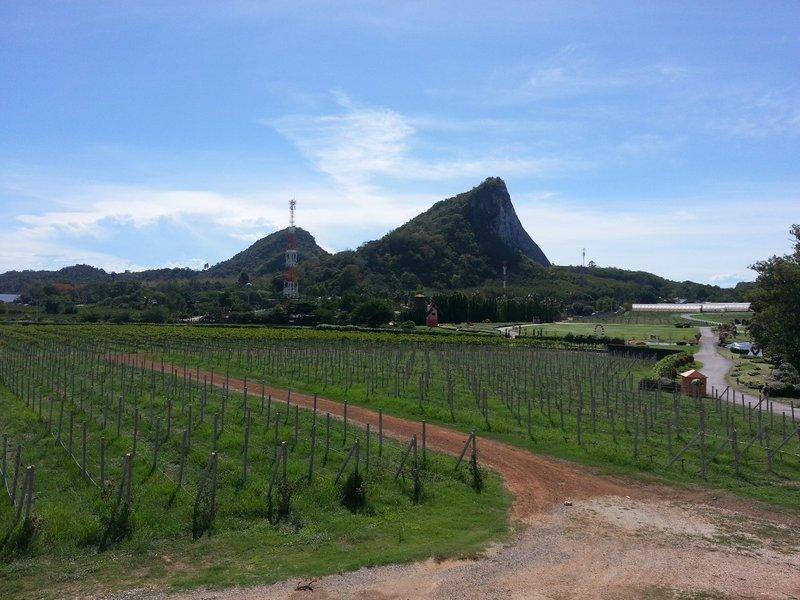 Vineyard near to Buddha Mountain (Khao Chi Chan)