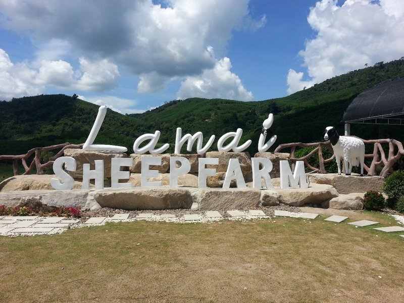 Lamai sheep farm