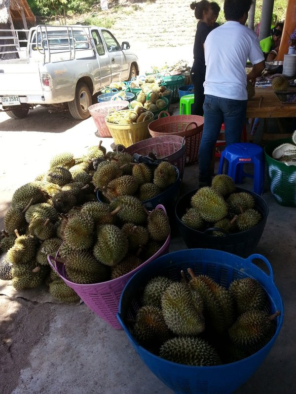 Monthong durians