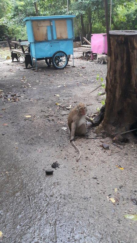 Wet macaque