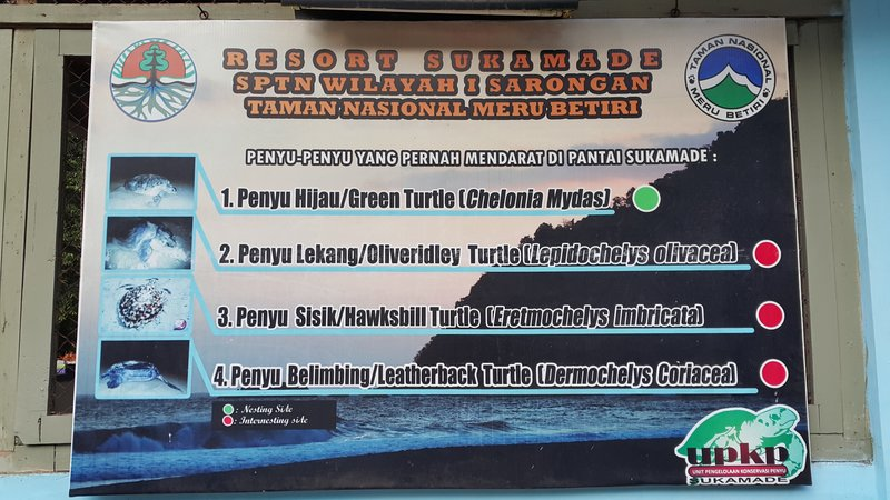 Types of turtles that land on Sukamade beach