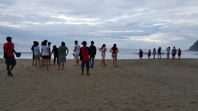 Turtle releasing session