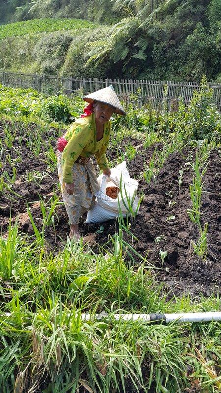 Old lady tending her vegetables