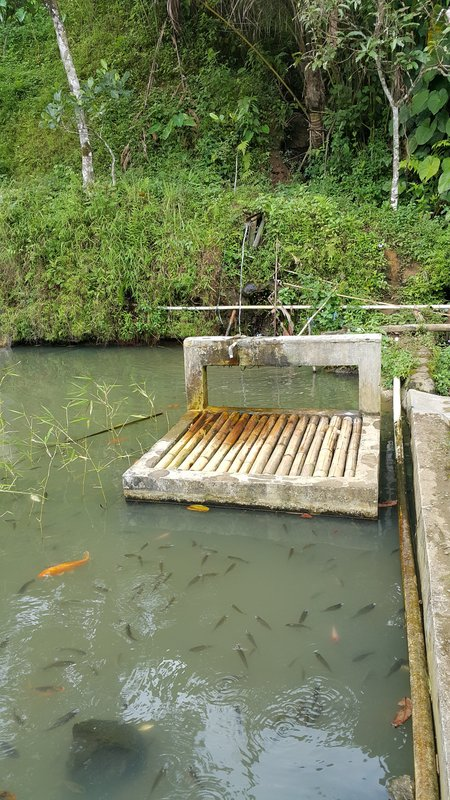 Fresh water supply with fish pond