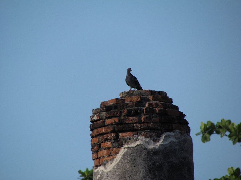 Bird resting on a ruin structure