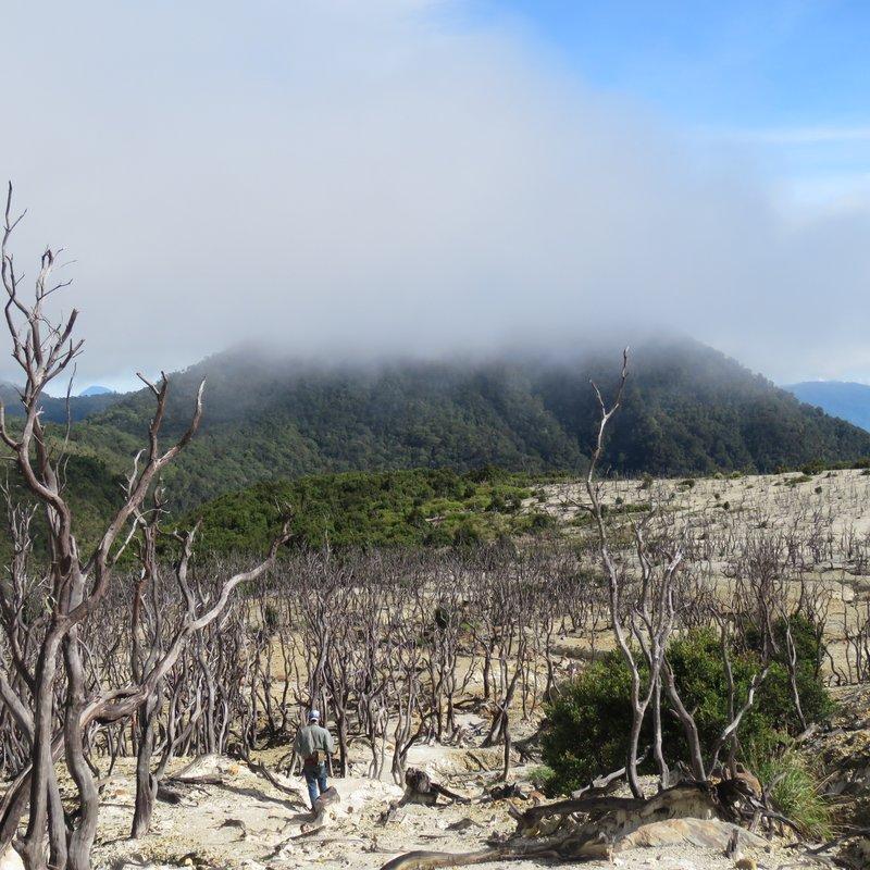 Walking through dead forest