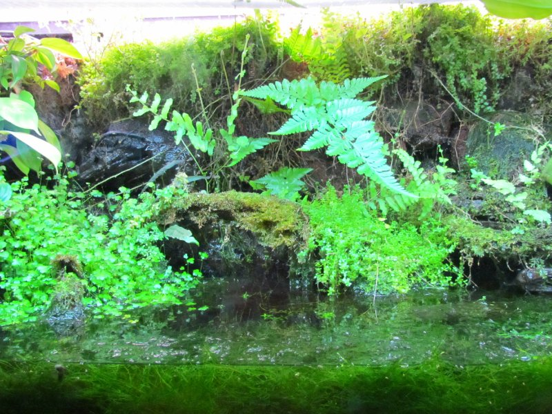 Stream plants