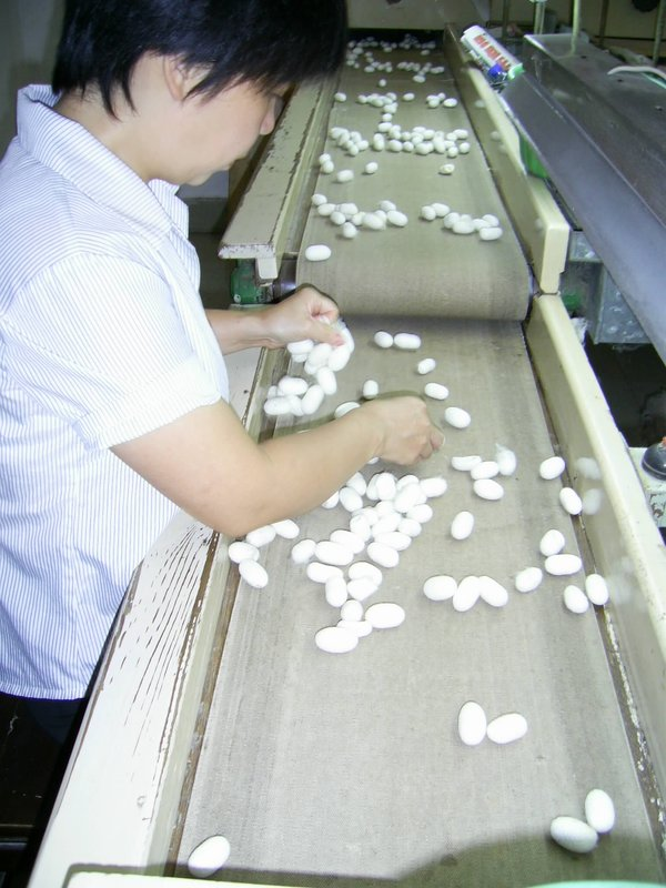 Sorting out the cocoons