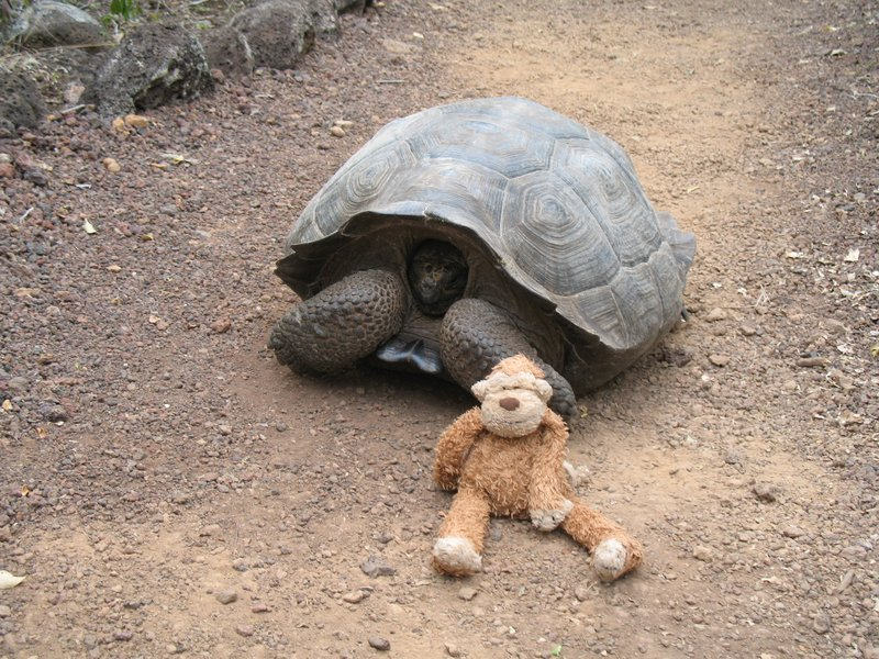 Monkey and the Tortoise