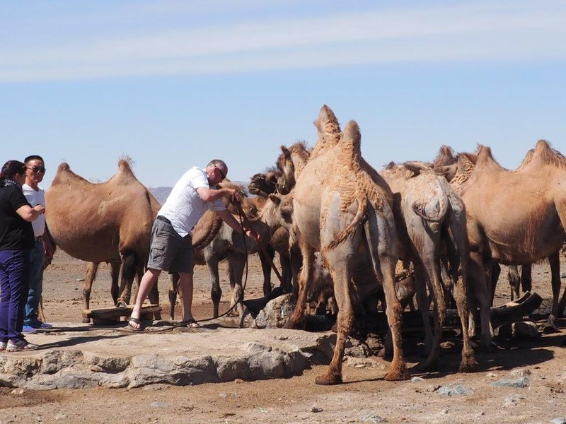 Watering camels in the middle of the Gobi