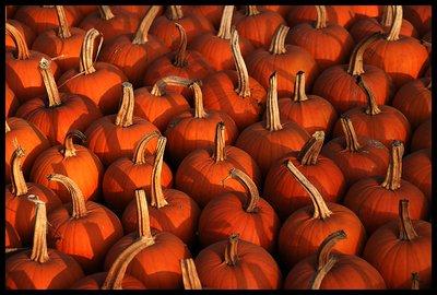 Halloween drill...