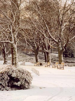 Winter comes to the Glasgow botanical gardens