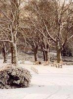 Winter comes to the Glasgow botanical gardens