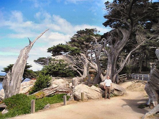 17 Mile drve - USA - Big Sur