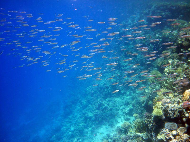 Tiran island - Egypt