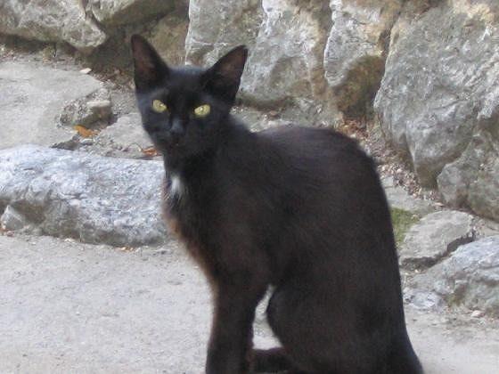 Crna macka - Bakar
