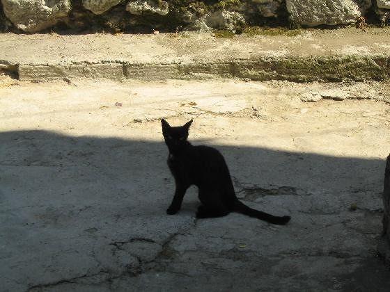 The black cat - Bakar