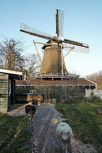 Molen D'Admiraal, Amsterdam, Netherlands 2010 - Amsterdam