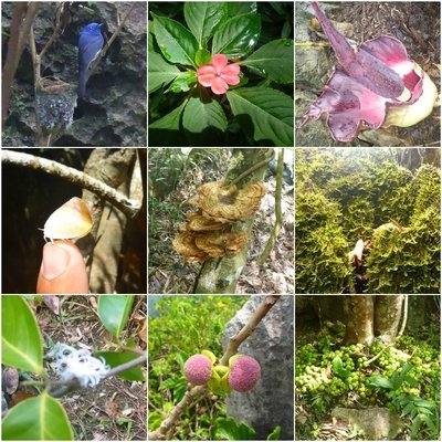 Collage of some flora and fauna in Masungi