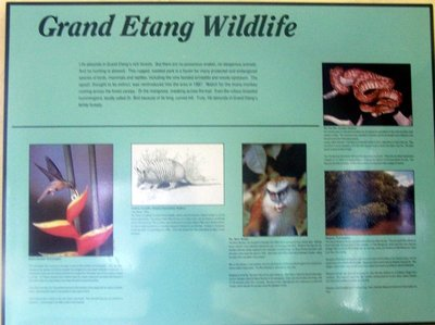 Grand Etang wildlife