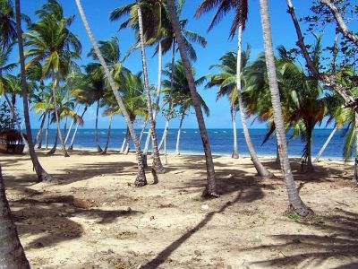 Palms on the beach - Las Terrenas