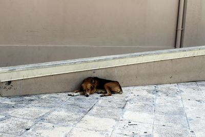 Dog asleep by the ramp to the Cathedral - Puerto Plata