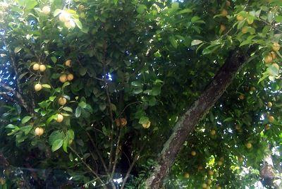 Nuts or fruits - Saint John