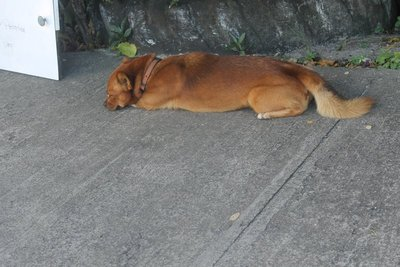 Grenada dog