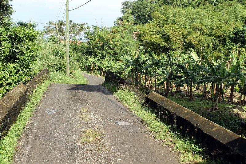 road to Douglaston