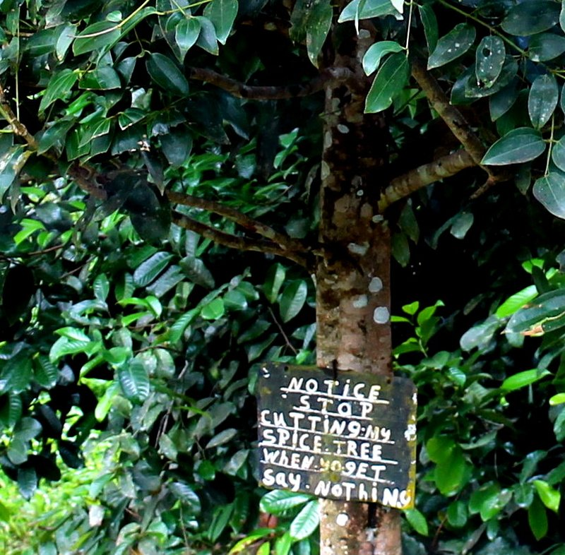 Sign - Notice Stop Cutting My Spice Tree
