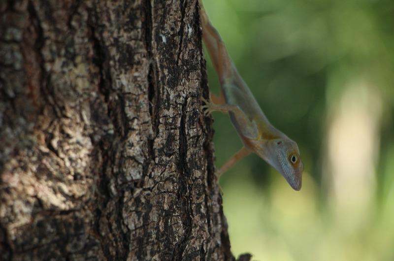 Lizard in the tree!