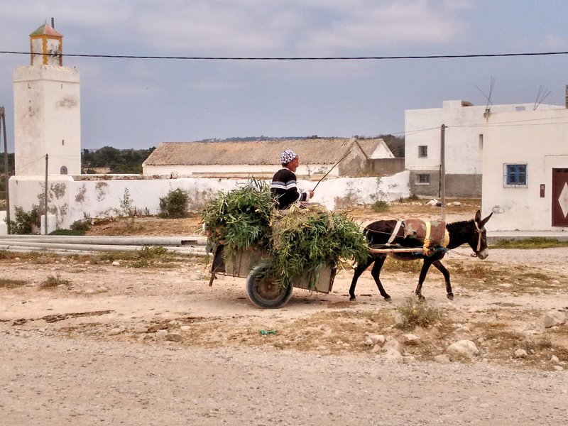 Essaouira, Morocco, Diabat village,