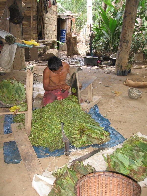 Cutting up tobacco leaf