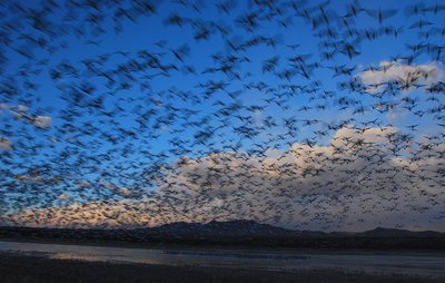 Bosque del Apache, NWR