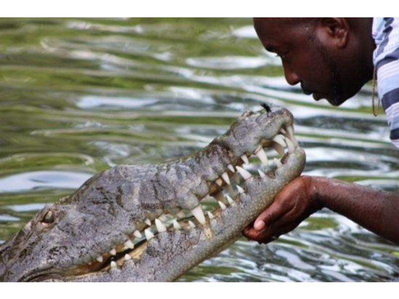 Crocodile Kiss Black River Safari Tou