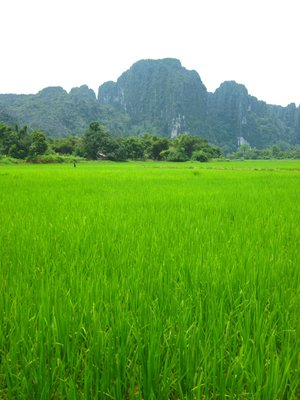 Lush Green Rice Paddies - Vang Vieng