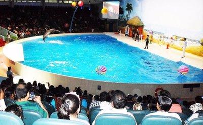 1200px-Dolphin_show_at_Dubai_dolphinarium,_September_2012