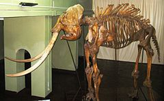 240px-Heiyantuduwa_Raja's_Skeleton