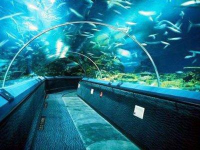 shanghai-oceanarium-10