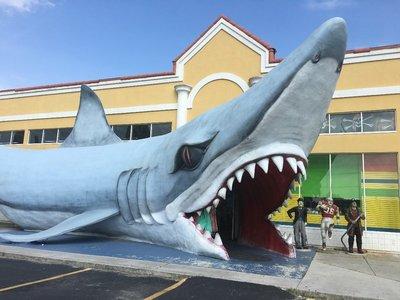 Shark02.jpg