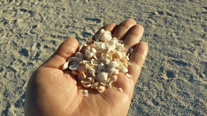 large_19_Shell_beach_1.jpg