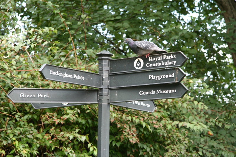 Bird sitting on a sign at Saint James's Park